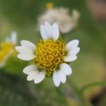 小さなかわいい花(10/15)