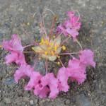 これが1つの花